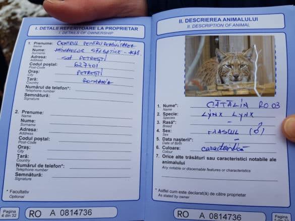 Potni list risa Katalina. Foto: Maja Sever.
